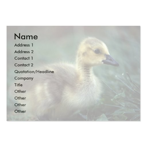 profile or business card, chick