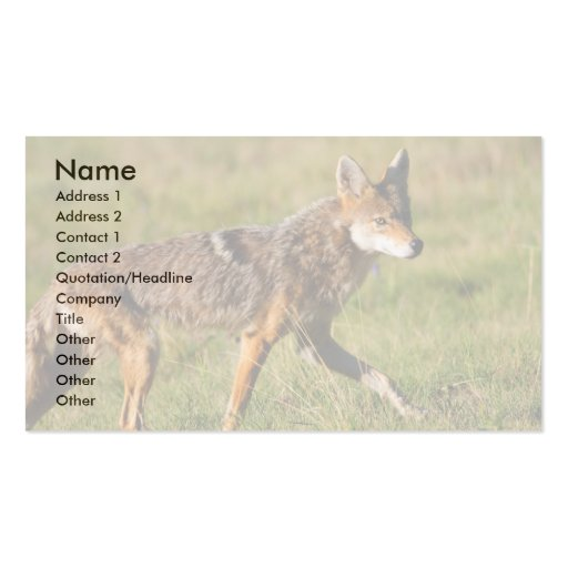 profile or business card, coyote pack of standard business cards