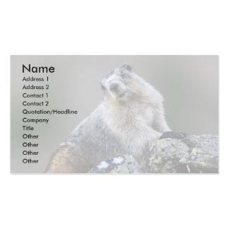 profile or business card, marmot