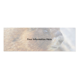 profile or business card, marmot pack of skinny business cards