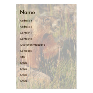 profile or business card, marmot pack of chubby business cards