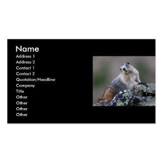 profile or business card, marmot pack of standard business cards