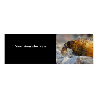profile or business card, marmots