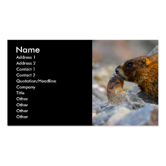 profile or business card marmots