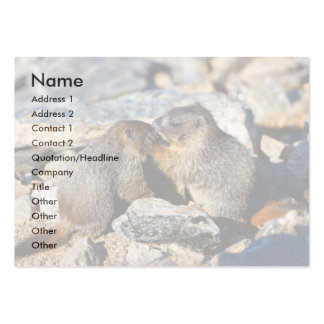 profile or business card, marmots pack of chubby business cards