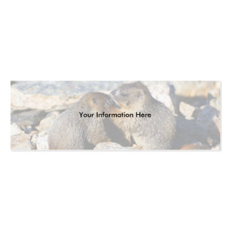 profile or business card, marmots pack of skinny business cards