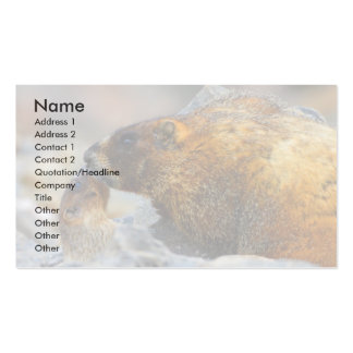 profile or business card, marmots pack of standard business cards