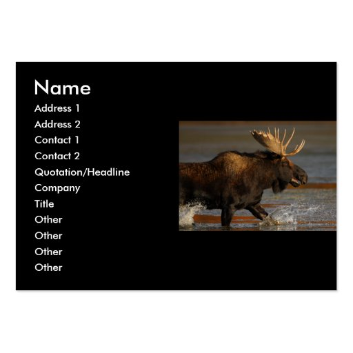 profile or business card, moose