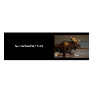 profile or business card, moose