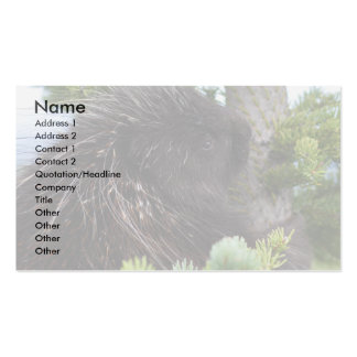 profile or business card, porcupine