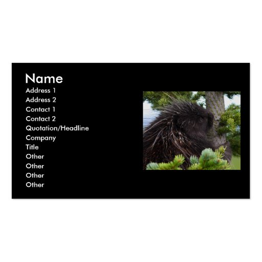 profile or business card, porcupine