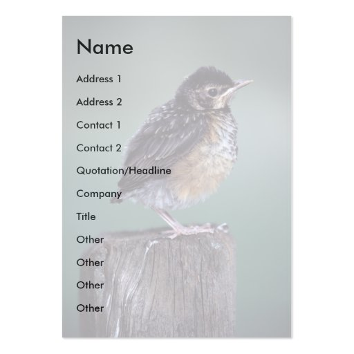 profile or business card, robin