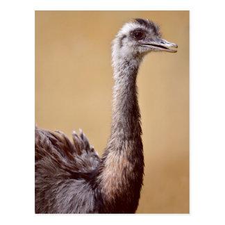 Profile portrait of Greater Rhea Postcards