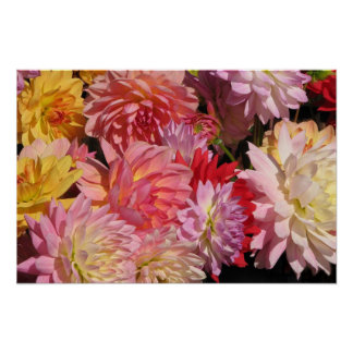 Profusion of Dahlias Poster
