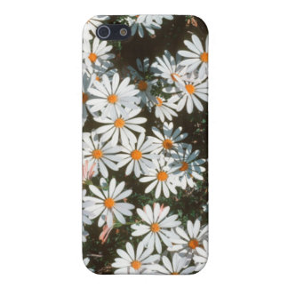 Profusion Of White Daises (Asteraceae) iPhone 5/5S Covers