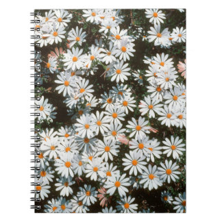 Profusion Of White Daises (Asteraceae) Spiral Notebook