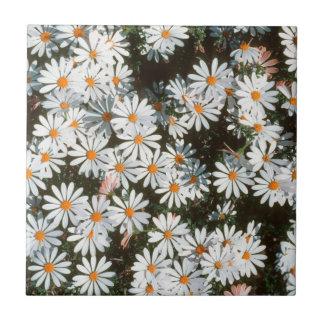 Profusion Of White Daises (Asteraceae) Tile