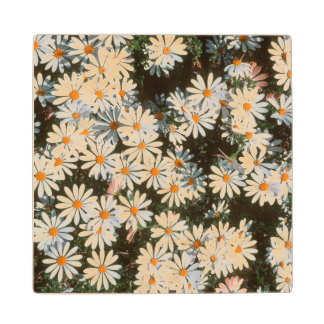 Profusion Of White Daises (Asteraceae) Wood Coaster