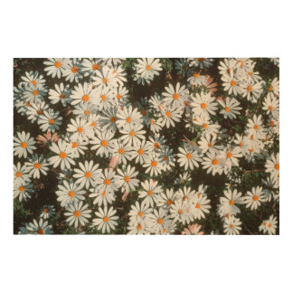 Profusion Of White Daises (Asteraceae) Wood Print