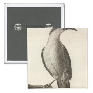 Promerops or Bee Eater of California 15 Cm Square Badge