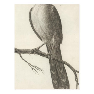 Promerops or Bee Eater of California Postcard
