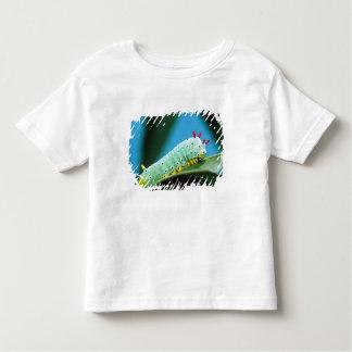 Prometheus Moth Caterpillar, Callosamia Shirts
