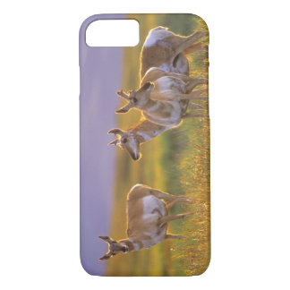 Pronghorn Antelope in Montana iPhone 8/7 Case