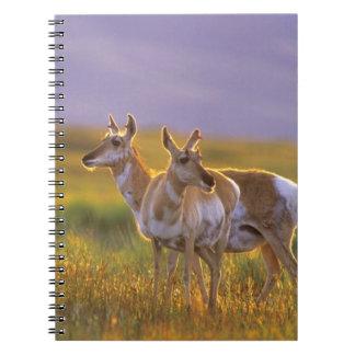 Pronghorn Antelope in Montana Notebook