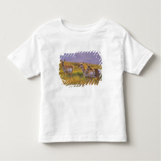 Pronghorn Antelope in Montana Toddler T-Shirt