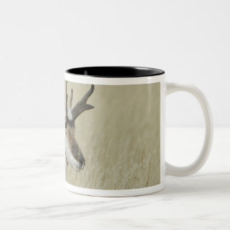 Pronghorn male resting, Yellowstone NP,Wyoming Two-Tone Coffee Mug