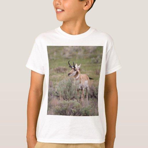 Pronghorn Shirts