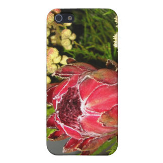Protea Bouquet iPhone 5 Covers