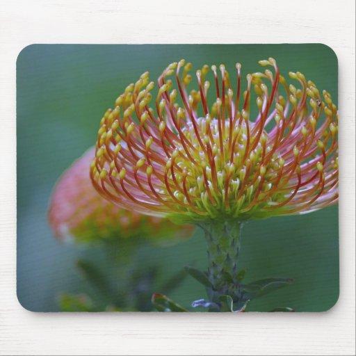 Protea Flower Mouse Mats