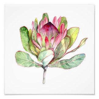 Protea Flower Photo Print