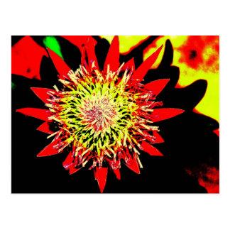 protea postcard