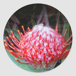 Protea Round Sticker
