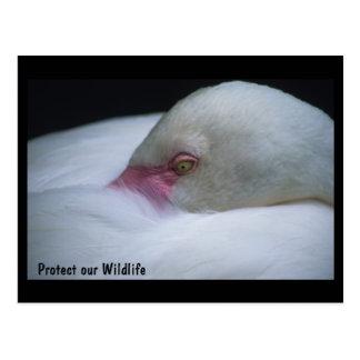 Protect our Wildlife Flamingo Postcard