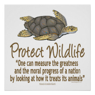 Protect Sea Turtles Posters