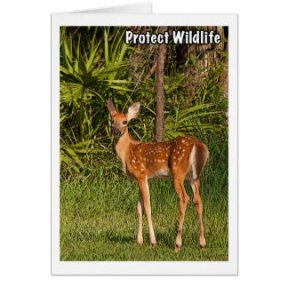Protect Wildlife Card
