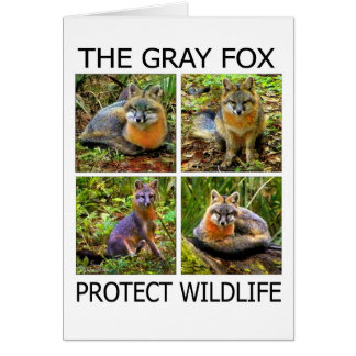 PROTECT WILDLIFE CARDS