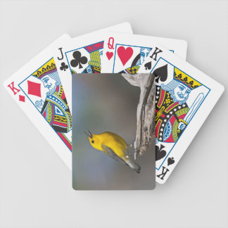 Prothonotary Warbler adult male in spring, Texas 2 Bicycle Playing Cards