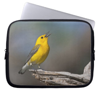 Prothonotary Warbler adult male in spring, Texas 2 Computer Sleeve
