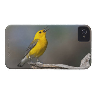 Prothonotary Warbler adult male in spring, Texas 2 iPhone 4 Cases