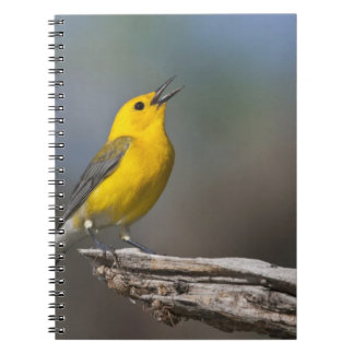 Prothonotary Warbler adult male in spring, Texas 2 Notebook