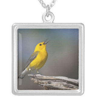 Prothonotary Warbler adult male in spring, Texas 2 Silver Plated Necklace