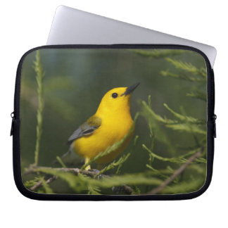 Prothonotary Warbler adult male in spring, Texas Laptop Sleeves