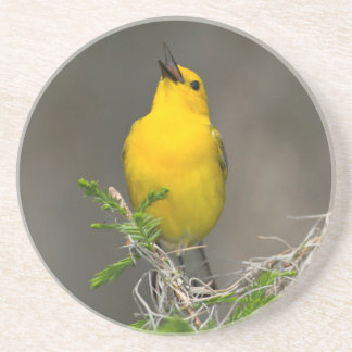 Prothonotary Warbler (Prothonotaria Citrea) Male Coaster