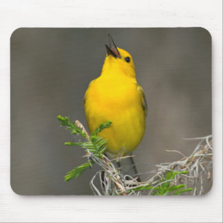 Prothonotary Warbler (Prothonotaria Citrea) Male Mouse Mat