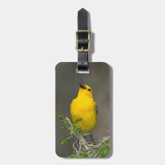 Prothonotary Warbler (Prothonotaria Citrea) Male Tag For Bags