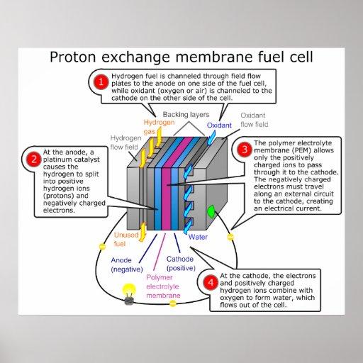 Proton Exchange Membrane Fuel Cell Diagram Poster